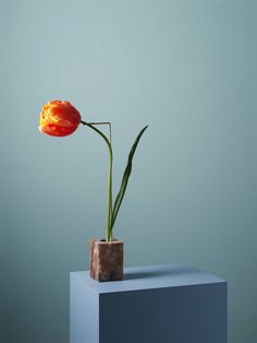 Posture Vases: perfect sculptures between reality and fiction   Lancia TrendVisions