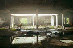 nonclickableitem #abandoned #deer #building #ruins