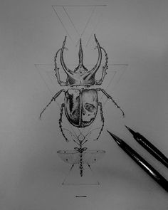 Pencil Drawing IV on Behance #ink #white #scarab #black #beetle #illustration #and #drawing #sketch