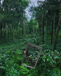 overgrown.jpg (721×900)