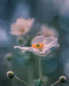 #splendid_flowers: Fantastic Flowers Photography by Elena Shavlovska