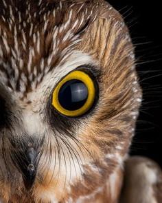 #birdstagram: Wonderful Bird Photography by Sean Graesser