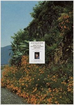 manystuff.org — Graphic Design daily selection » Blog Archive » Portfolios – Katharina Reidy & Krispin Heé – Anna Haas – Annett Höland, Lu #70s #graphic #wildflowers #rectangular