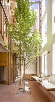 #patio #tree # architecture #arbol #arquitecture #house #lagula