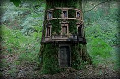 House Tree #treehouse