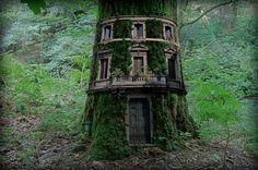 House Tree