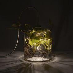 Green VASE LEUCHTE Lamp Interior