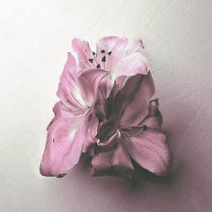 Kamp! #album #kamp #sulk #cover #soft #art #flower