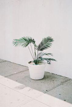 Plant. #plant #white #flowerpot
