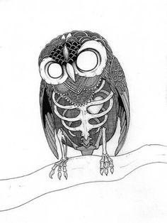 Tumblr #anatomical #drawing #owl #pen