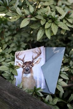 Snail's Pace Whitetail Deer Illustration - Note Card #deer #pace #snais #stationery #paper
