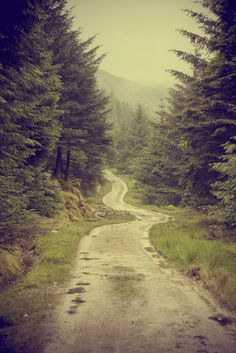 The road somewhat traveled. #forest #road
