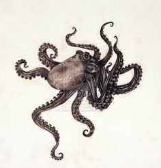 tumblr_m1w3cpuhaE1rt2qclo1_1280.jpg (900×938) #octopus #drawing #art