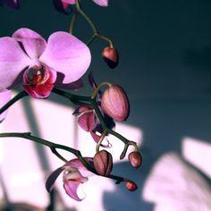 Bondage film, Javier Guerrero, STUA #jon #guerrero #orchidea #film #flower #bondage #gasca #stua #javier