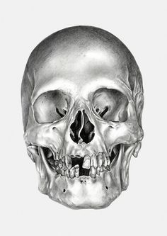 Ivan kamargio illustration #white #& #black #illustration #skull