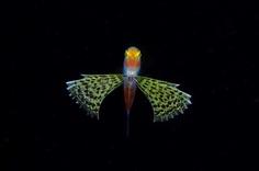 Photographer Ryo Minemizu Captures The Underwater World of Plankton