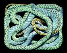 Eight Hour Day » Blog » The Best Thing I Saw Today • April 12, 2012 #snakes #photography