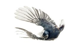 ☺ A blog for birds... #flight #bird #feathers #photography #wings #animal