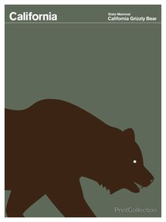 California #brown #grey #grizzly bear