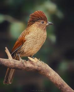 #birdsofinstagram: Beautiful Birds Photography by Tarun Dang