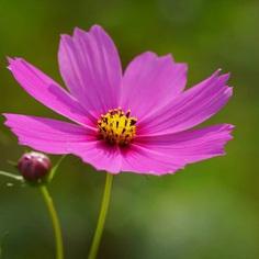 #ig_flowers: Beautiful Flowers Photography by Yasushi Kawakami