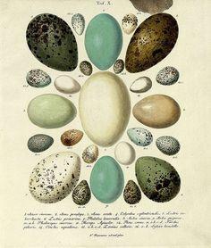 Google Reader (50) #eggs