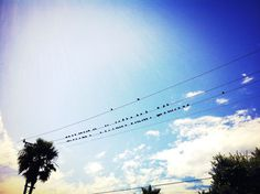 Birds #tumblr #plage #los #photographie #sky #picture #color #cali #manhattan #landscape #audreyevrard #birds #polacolor #colorful #californie #angeles #beach #california