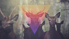 Matta - Release The Freq | Flickr - Photo Sharing! #deer #matta #design #video #photography #music