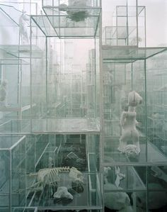 Terence Koh - Untitled (Vitrines 5 - Secret Secrets) - Contemporary Art #white #koh #box #terence #glas