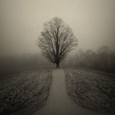 Deephaven, photography by Joan Kocak #tree