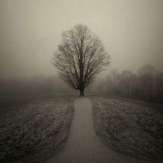 Deephaven, photography by Joan Kocak #tree