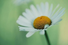 #floral_shots: Beautiful Macro Flower Photography by Christian Mu