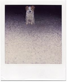 guardo le figure #animals #polaroid #photography #dog