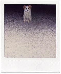 guardo le figure #animals #polaroid #photography #dog
