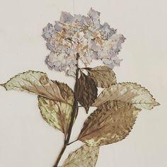 #flowerpress