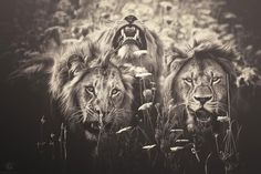 africa-souls-zoo-photography-manuela-kulpa-7 #photography #animals