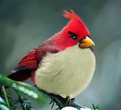 Real Angry Bird | Cuded #angry #real #bird