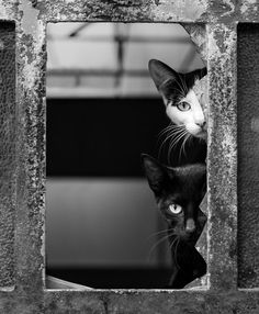 Fotografia de Mário Pereira #white #feline #curiosity #door #black #photography #cats #and #window #animal #pet #beauty