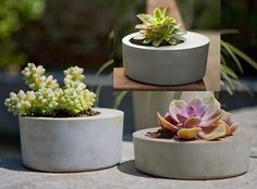10 Most Stylish Plants on Interior Design for 2010 ~ home of the GoodLorax #plants