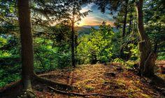 Forest Landscape Sunrise Free Hd Desktop Backgrounds – WallpapersBae
