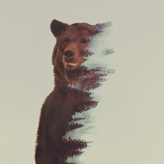 Double Exposure Bear by Andreas Lie