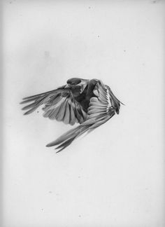 All sizes | Hellovon // #drawing #bird #flying #hello #von #pencil #grey