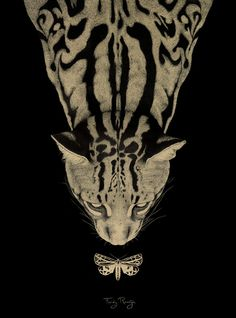 www.ferdyremijn.com #illustration #cat #feline #big cat #darkness #moth