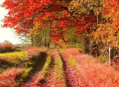 #colorful#red#orange#autumn#trees#