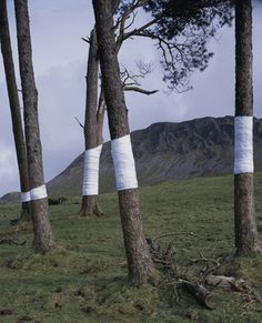 Zander Olsen_Tree, Line #fotography #performance #moutain #art #trees