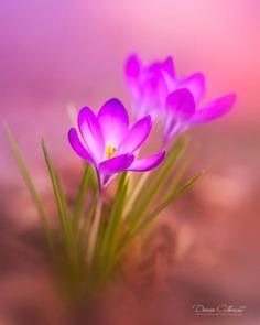Magical Flowers Photography by Doreen Albrecht