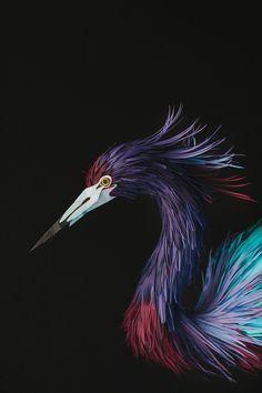Imagen #paper #bird