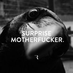 Surprise motherfucker.