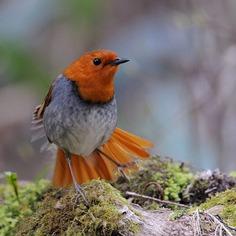 Birds of Japan: Beautiful Bird Photography by Hiroyuki Niimi