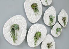 Seed by Taeg Nishimoto